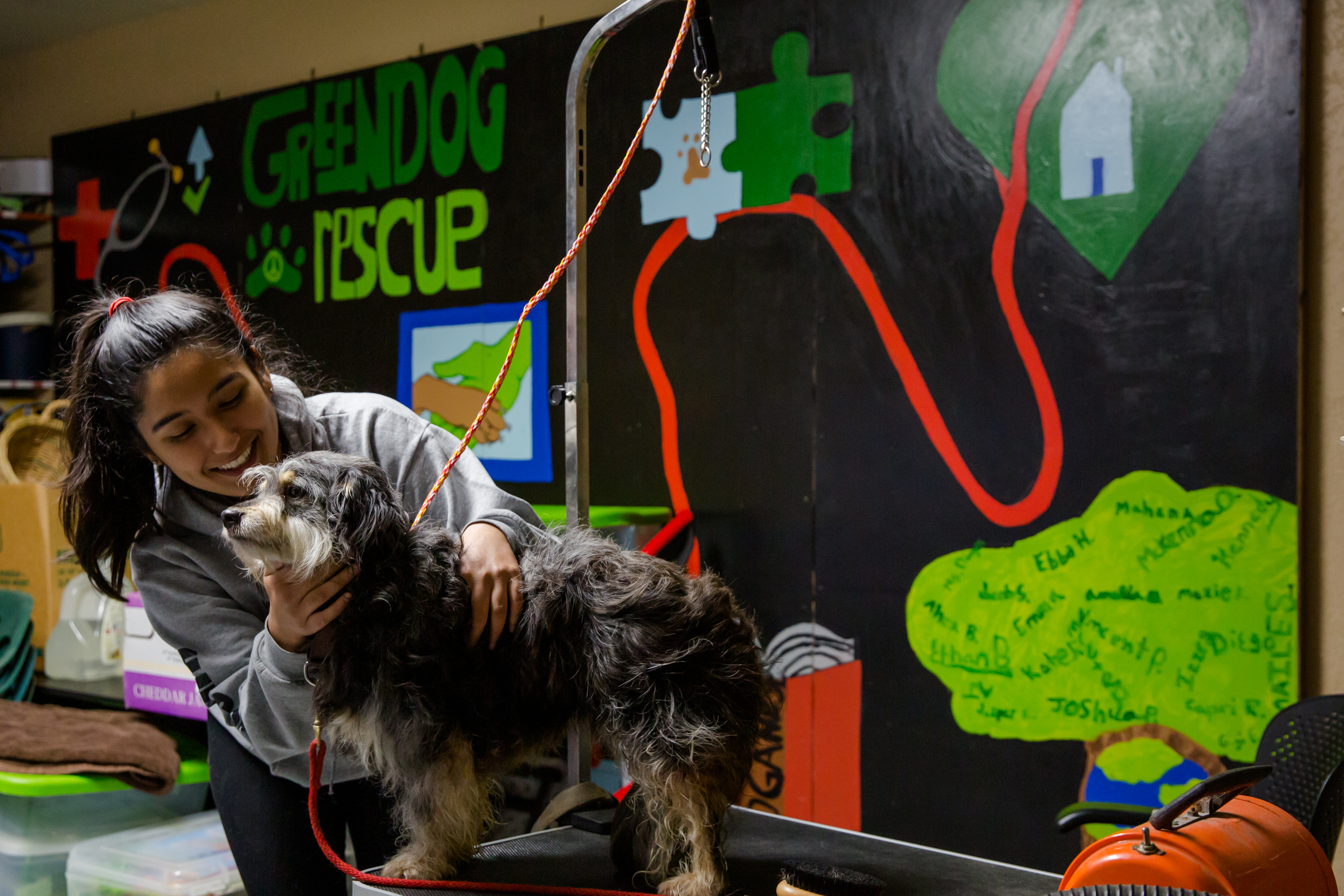 Student working at Green Dog Rescue, her chosen LTI site