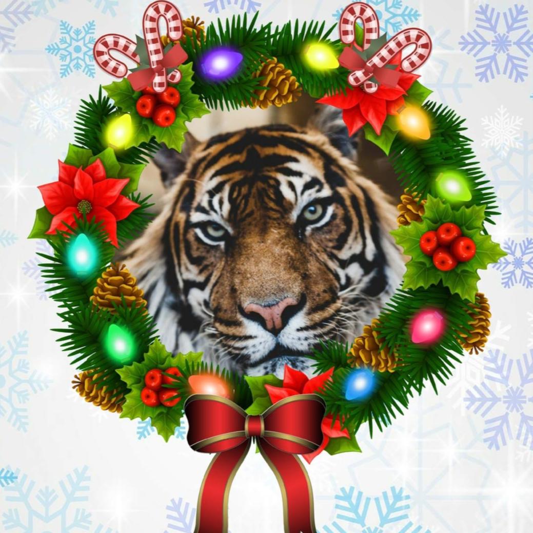 Happy Holidays Tigers!