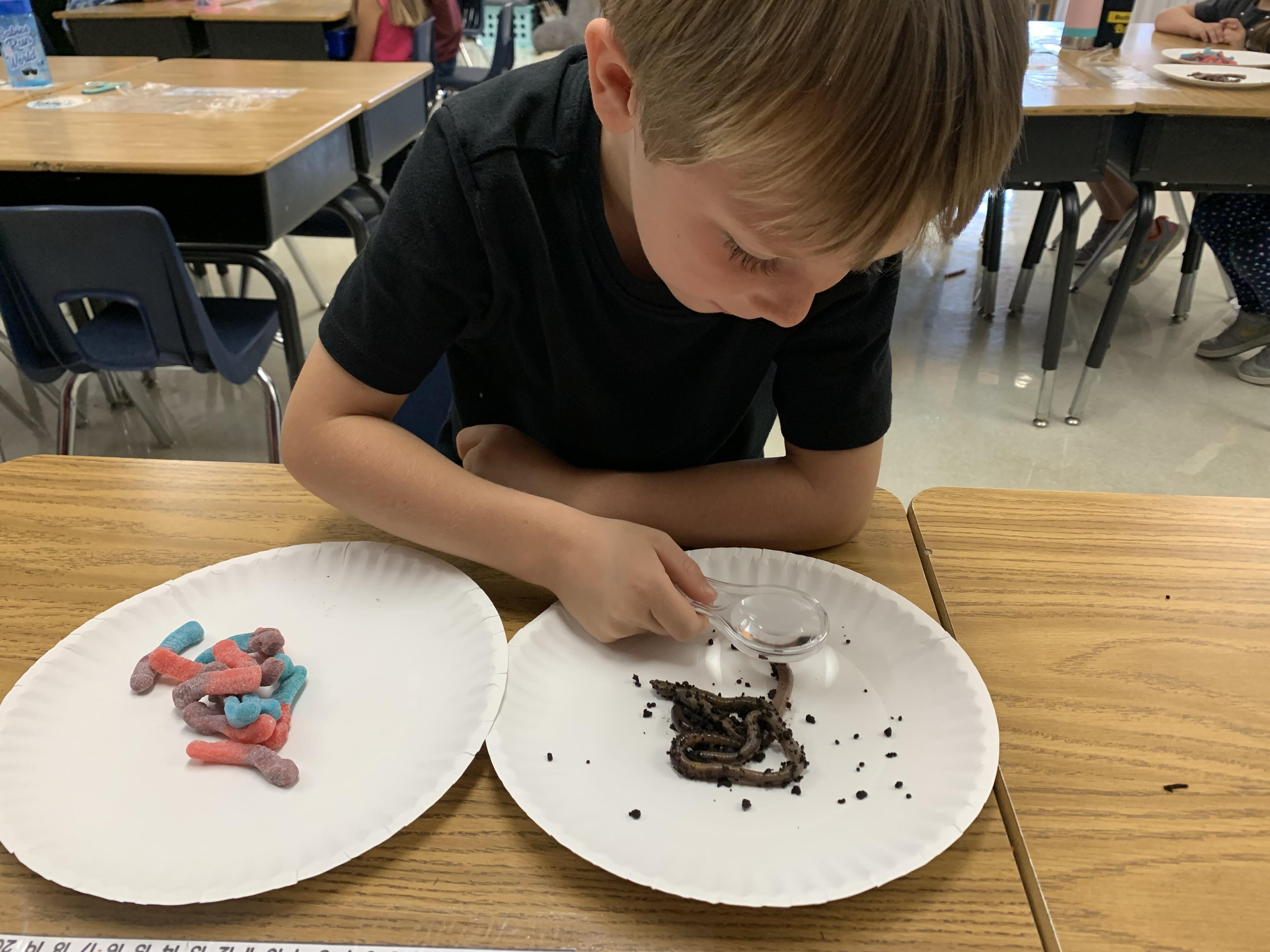 Worm experiment