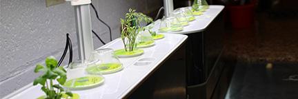 Indoor Plants under Grow Light