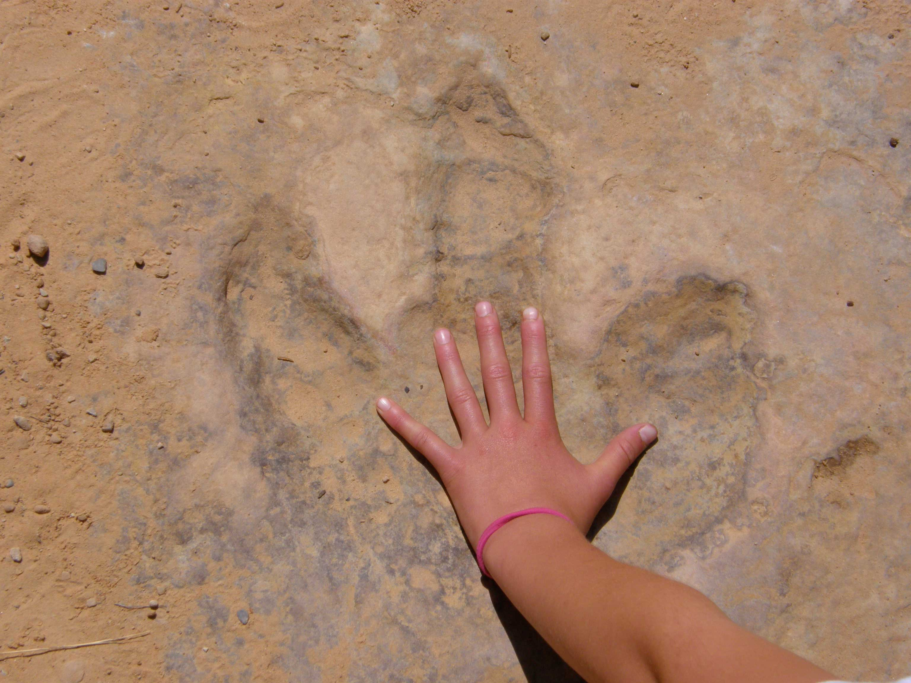 photo of Dinosaur footprint in the Navajo Sandstone, San Rafael Swell, Utah