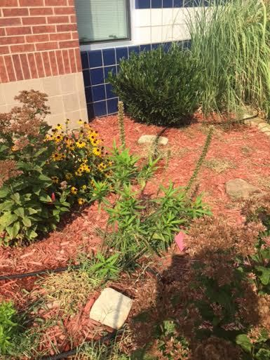 Photo of our Butterfly Garden.