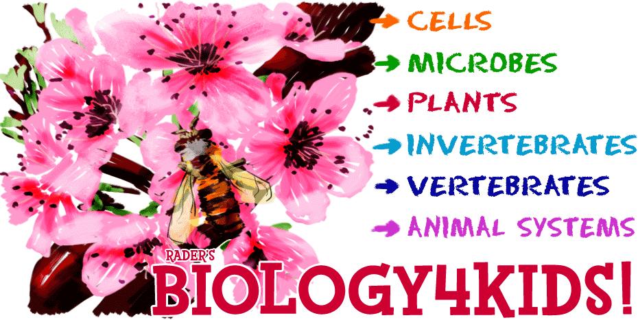 Rader's Biology4Kids!