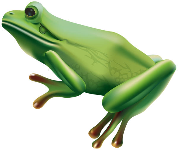 A clipart image of a tree frog