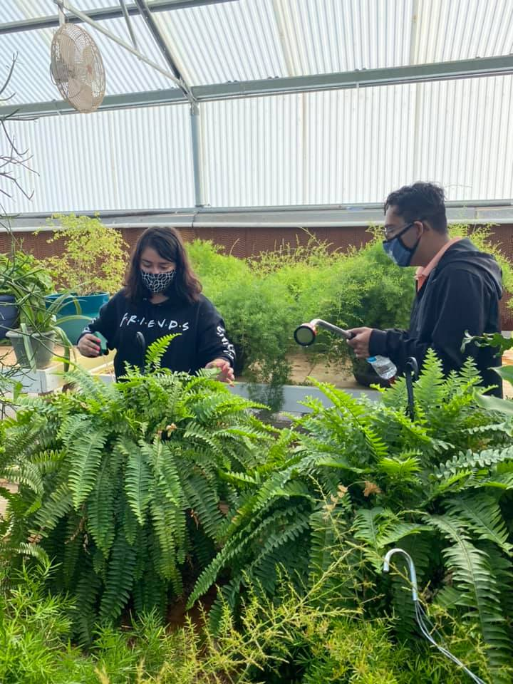 Students watering plants in greenhouse