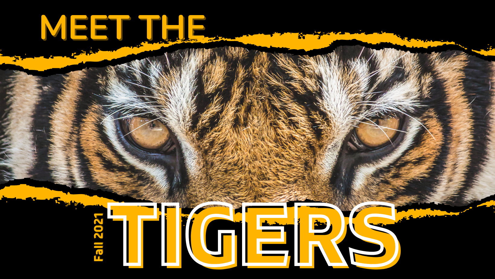 Meet the tigers graphic