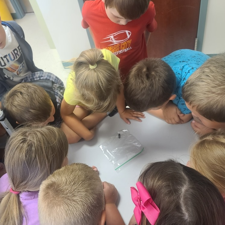 Students circle around to observe a bug in a baggie
