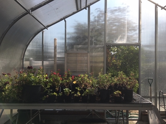 Inside Our Greenhouse