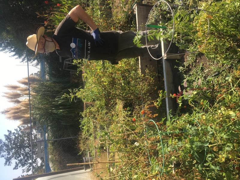 Wayne Britton Helping in the Garden