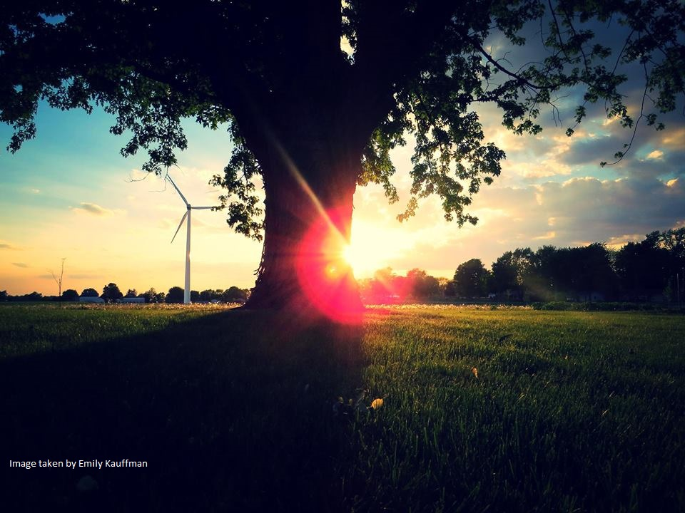 A picture of a tree and landscape with the windmill in the distance