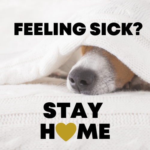 Feeling sick? stay home