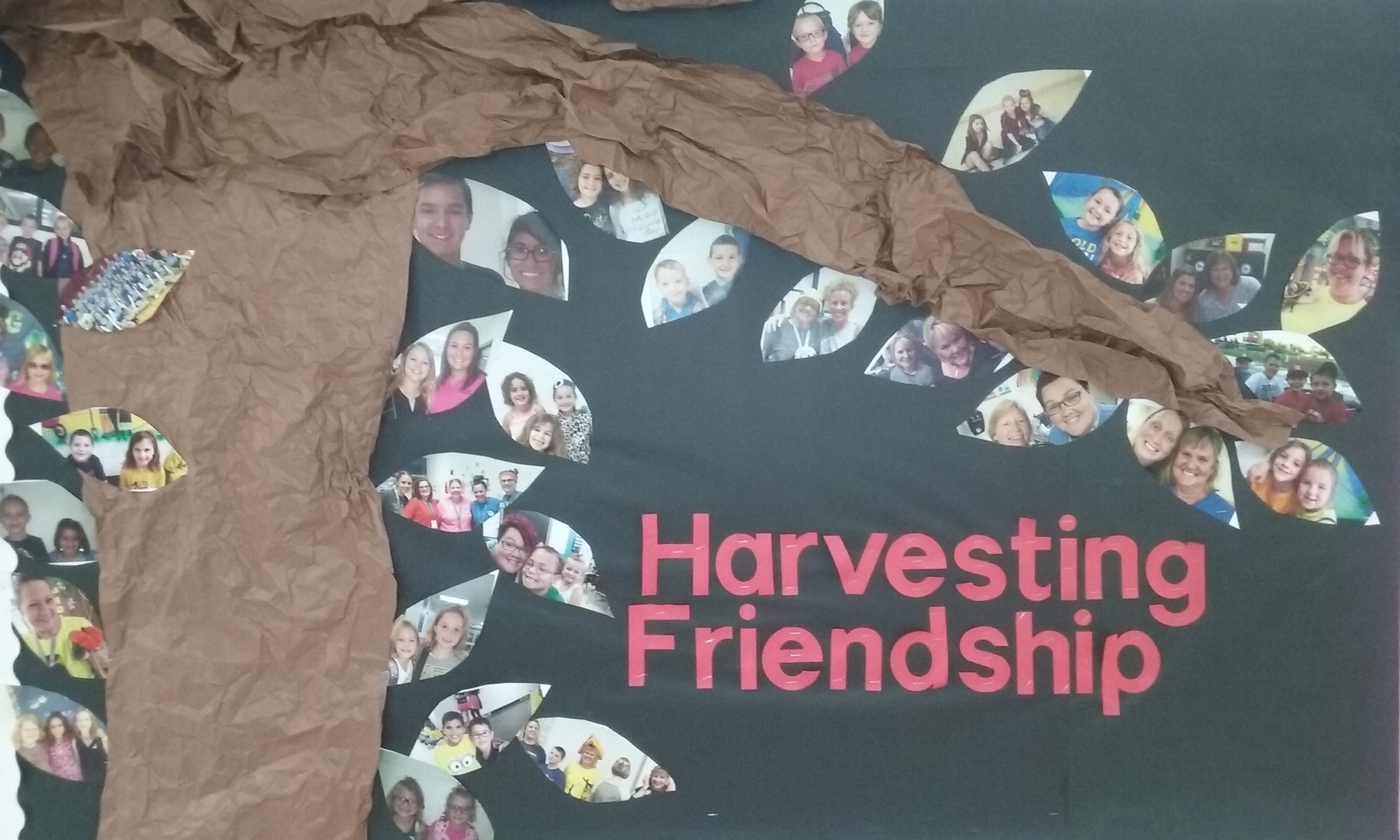 Harvest Friendships