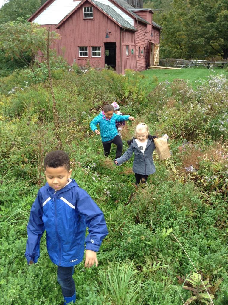 Grade 1 Sheephill