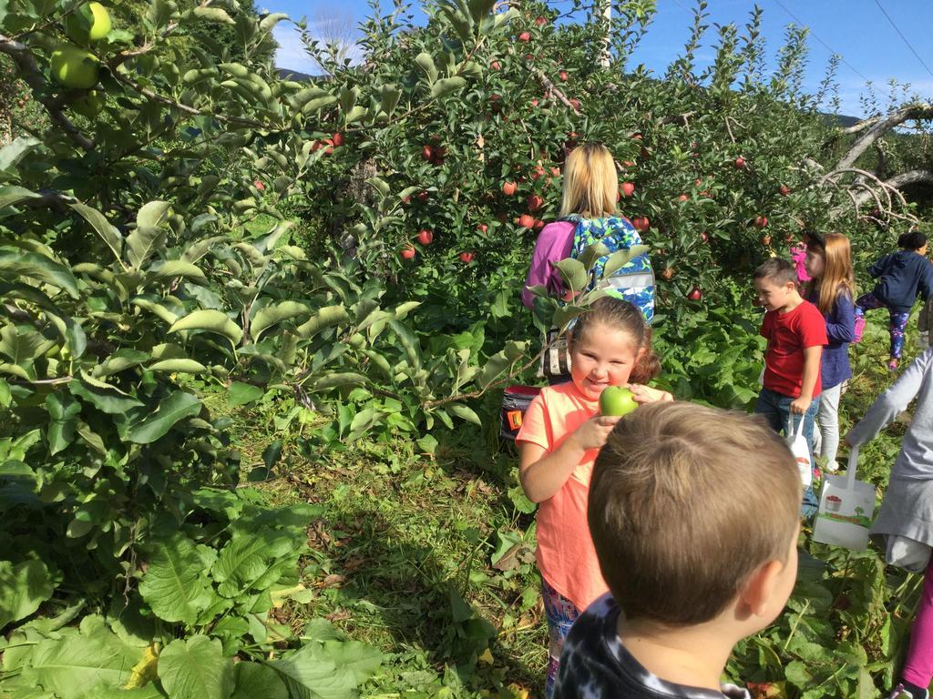 Grade 1 Apple Orchard