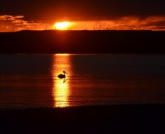 sunset with a duck