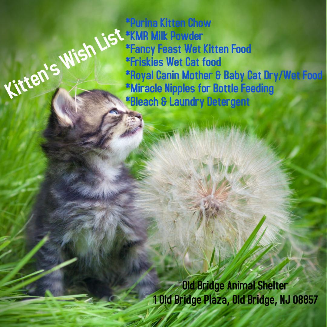 kitten wish