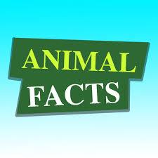 AnimalFacts
