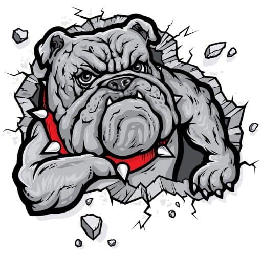 illustrated image of bulldog