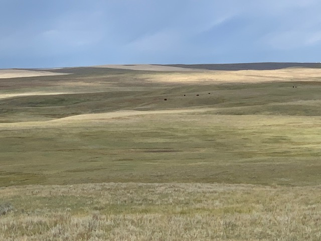 buffalo hunt 2019
