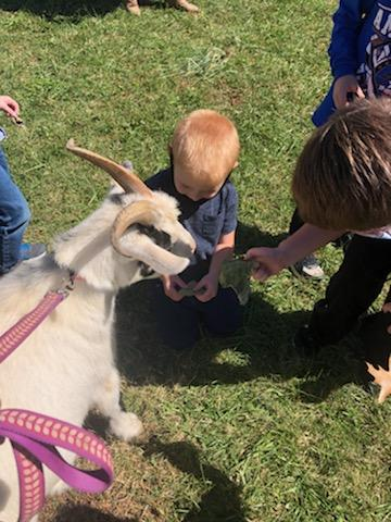 Student with a goat
