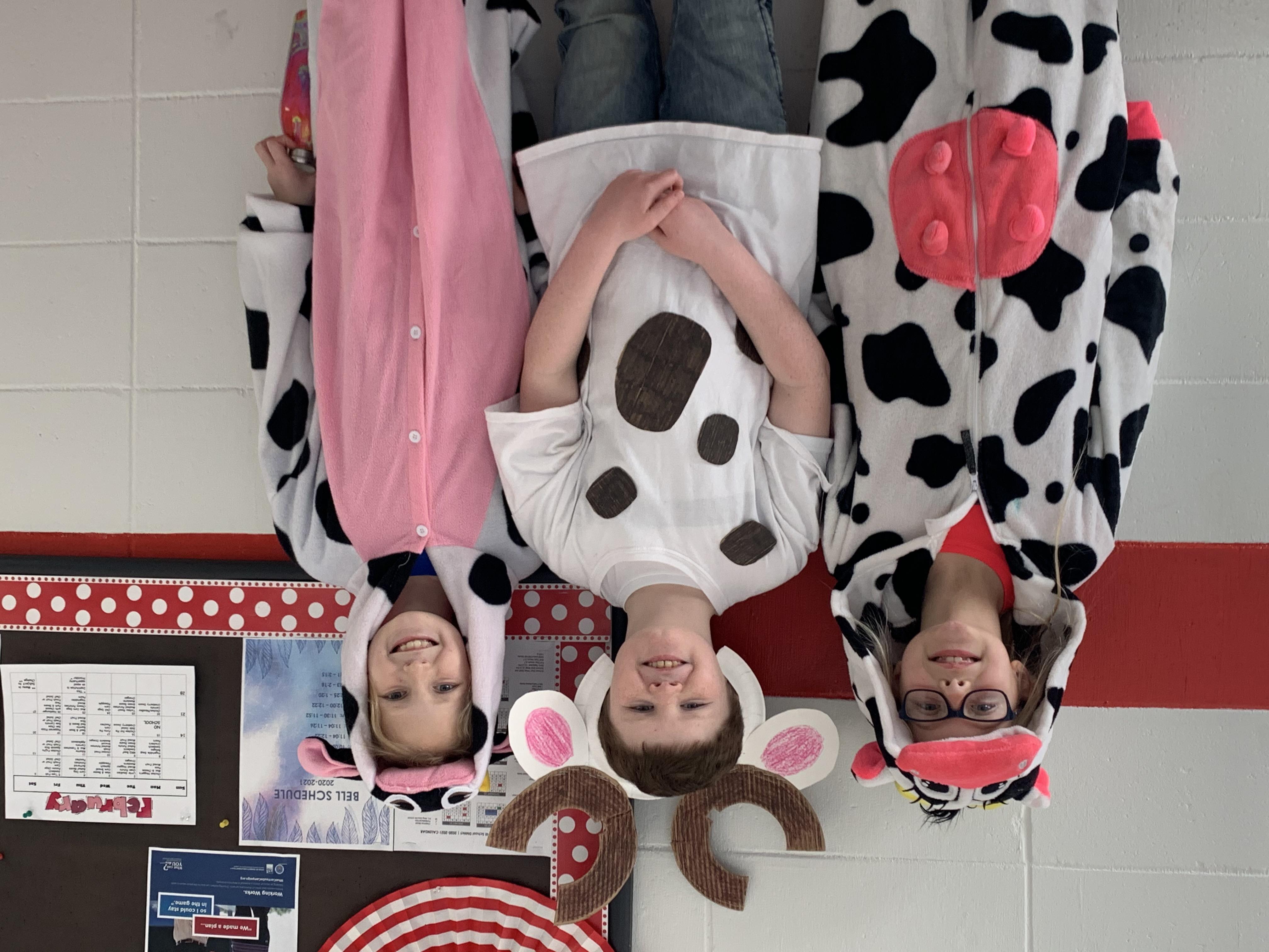 Third Grade Cows