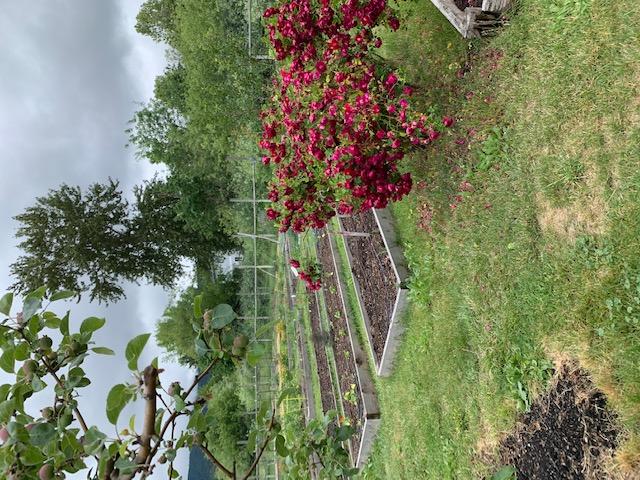 gardenbeds