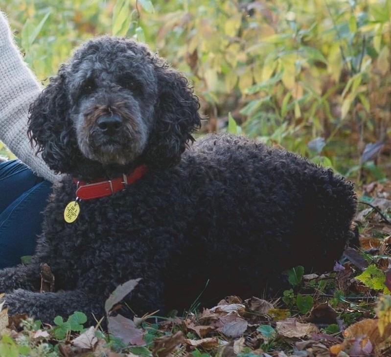 Therapy dog Winnie