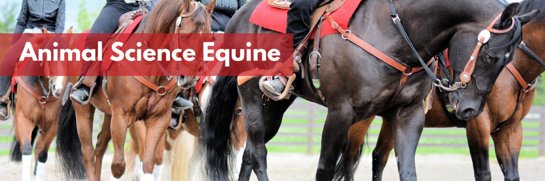 Animal Science Equine banner