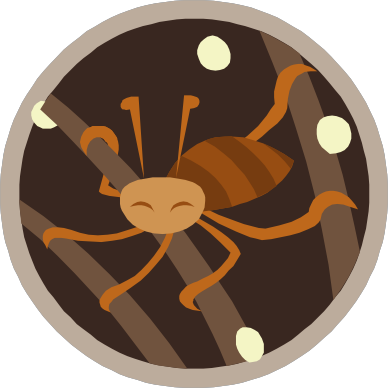 Head LiceHead Lice