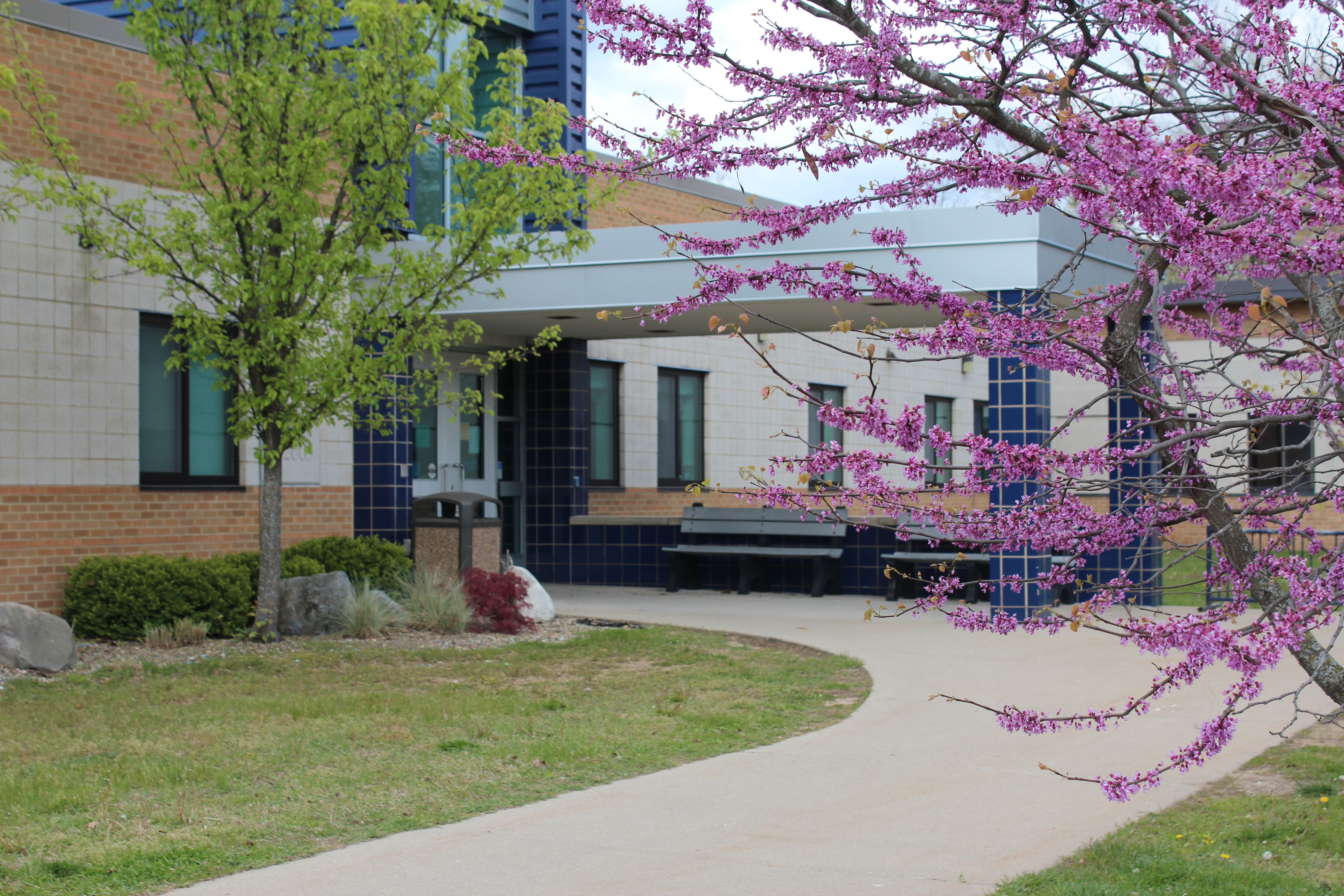Front Entrance to Gilkey Elementary with green tree and pink flowering tree