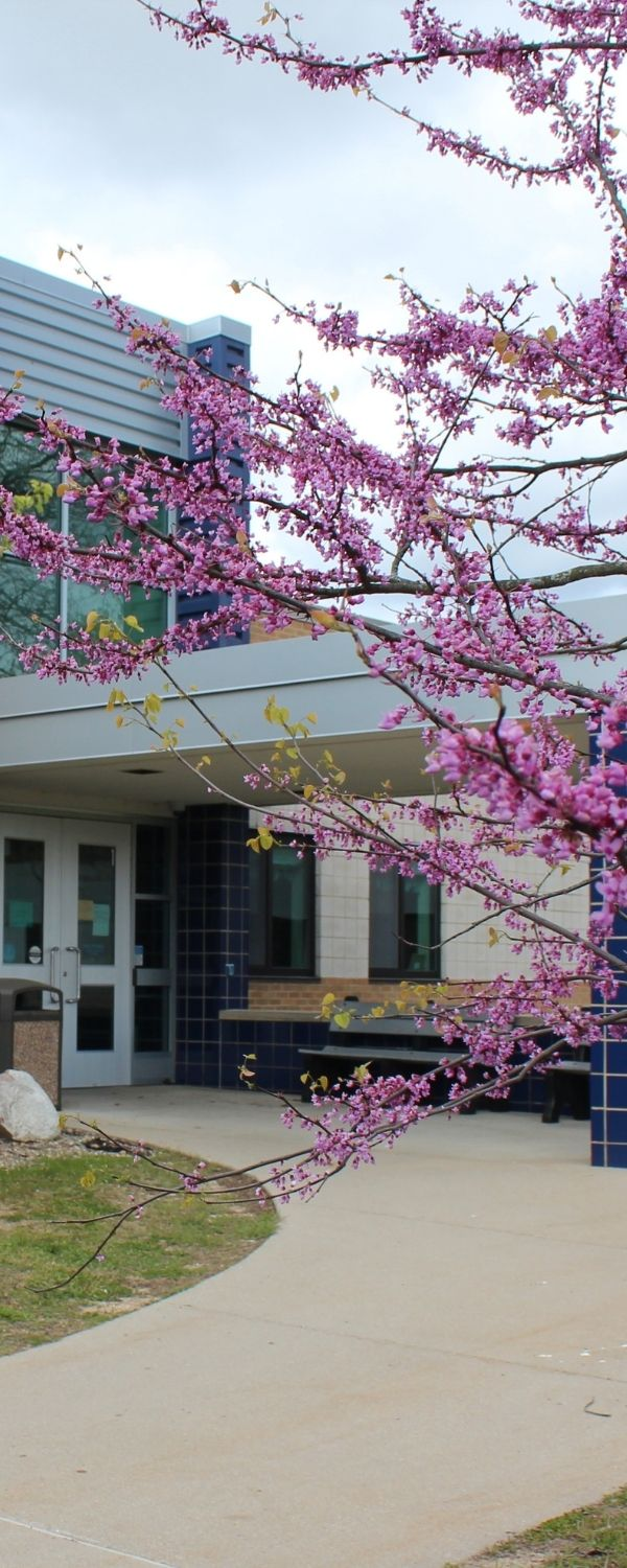 Picture of exterior at gilkey with pink flowering tree