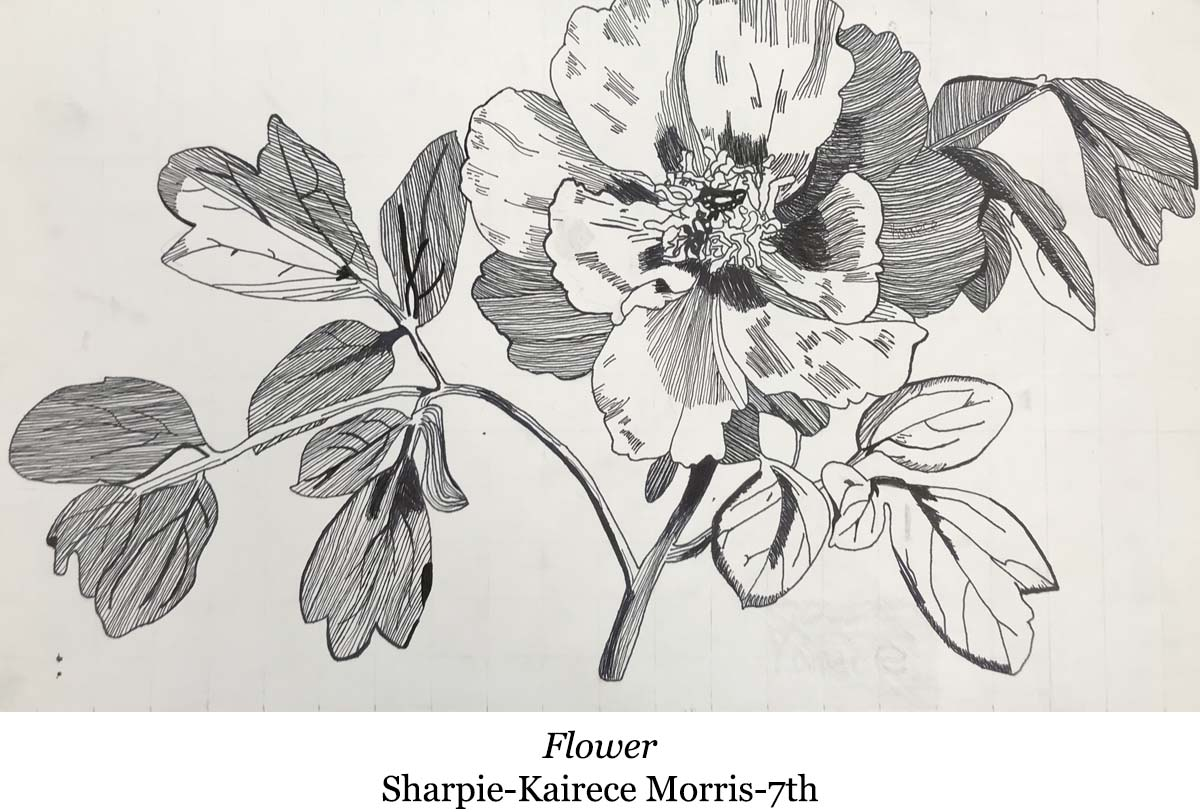 drawing of flower