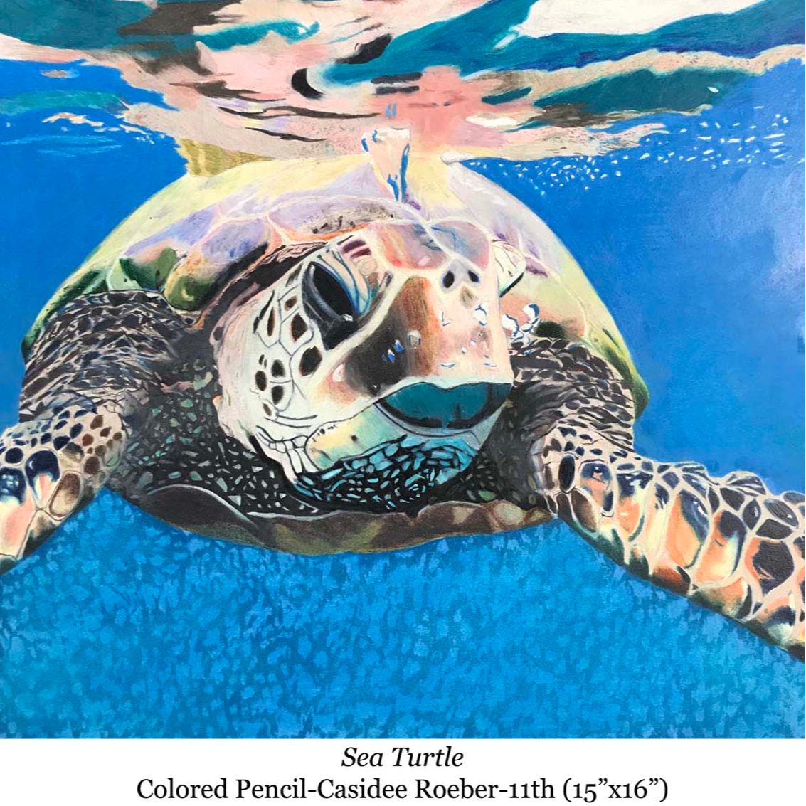 a drawing of a seaturtle