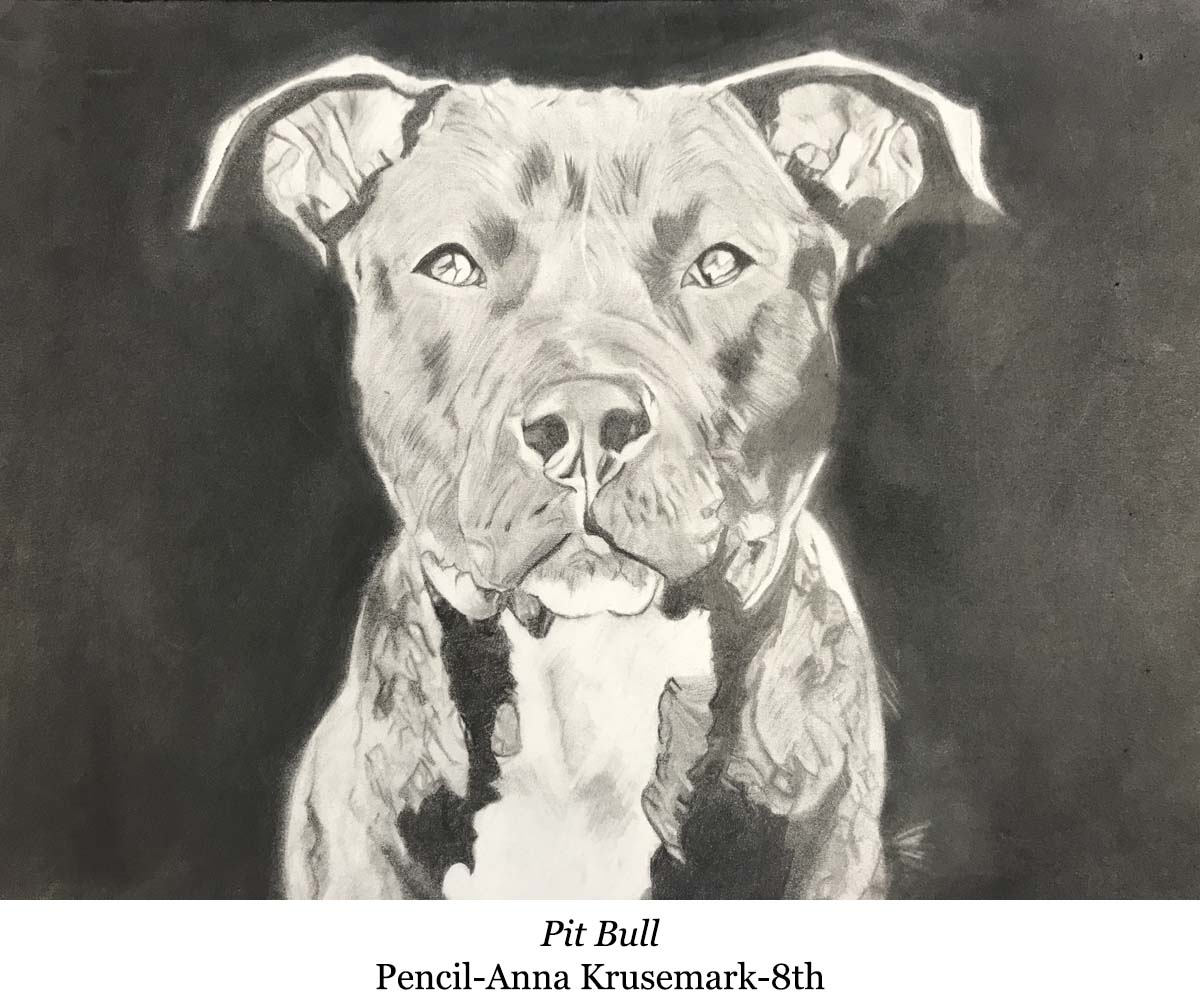 a drawing of a pit bull