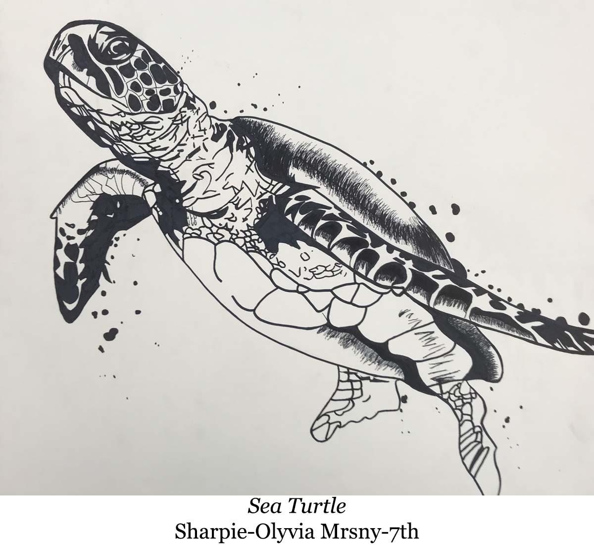 a drawing of sea turtle