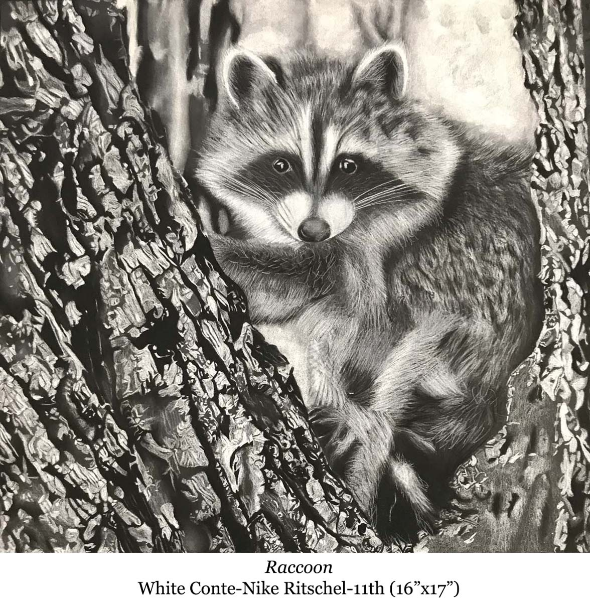 a drawing of raccoon