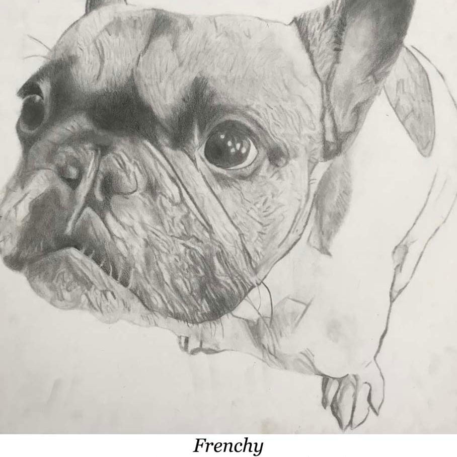 a drawing of a french bulldog
