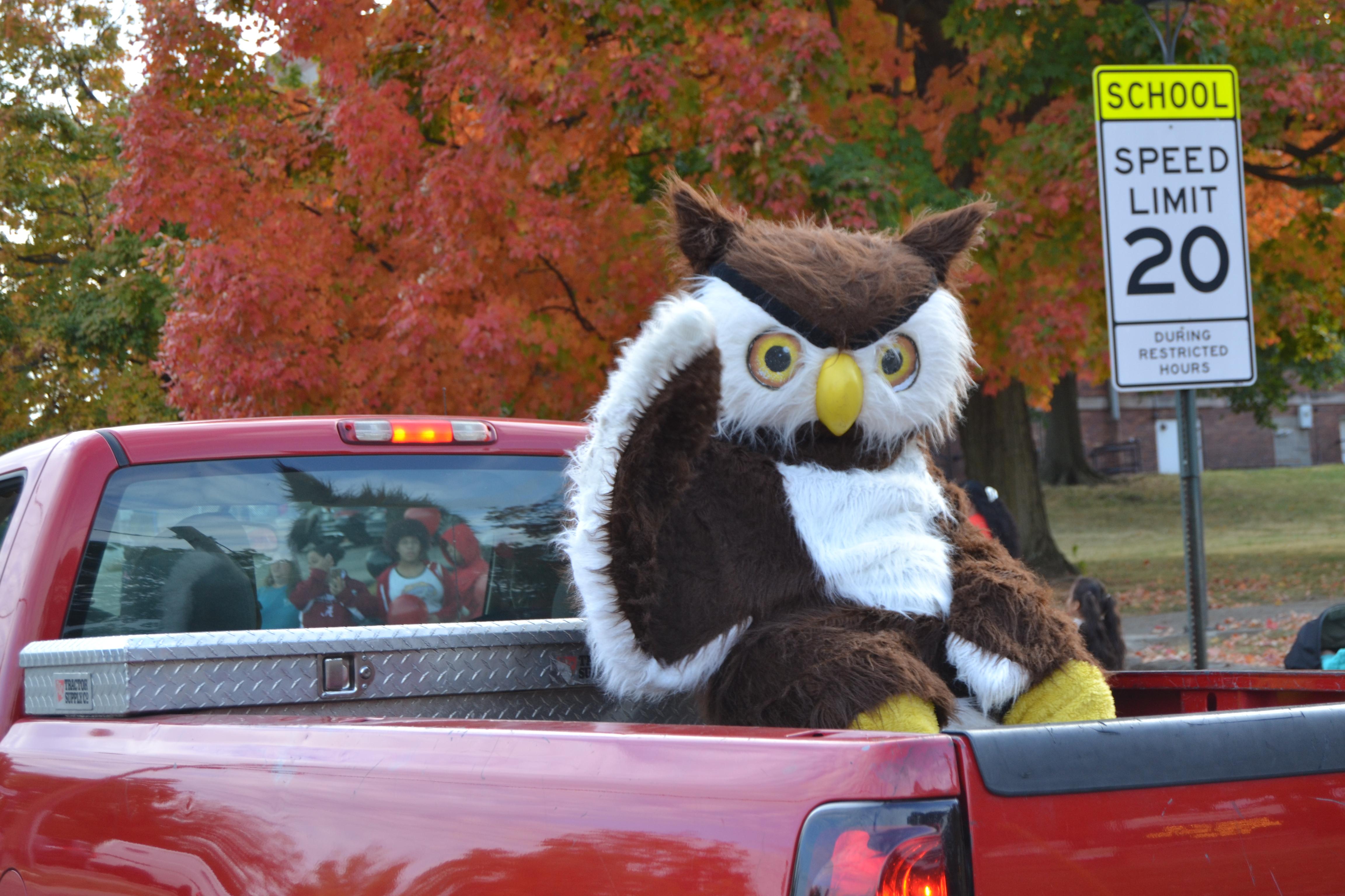 owl in truck