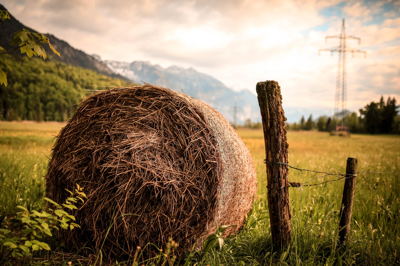 Round bale of hay