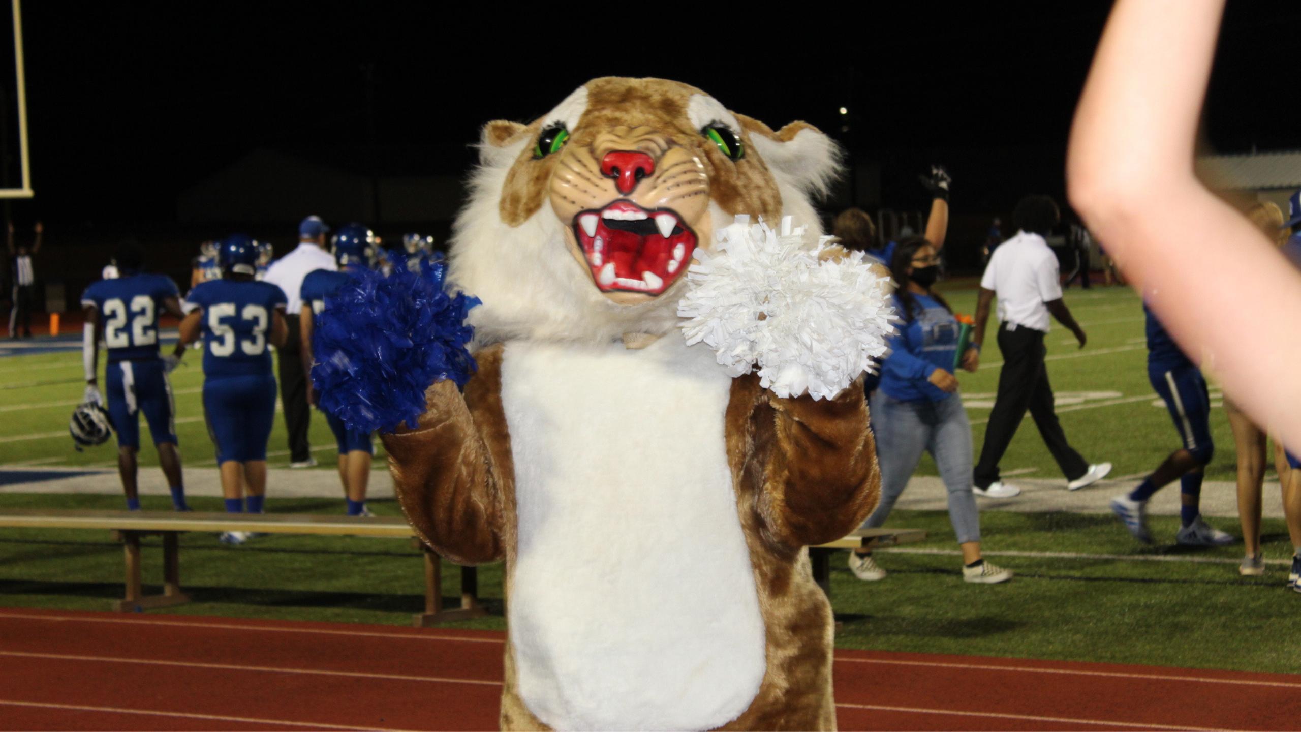 wildcat mascot cheering on the sidelines