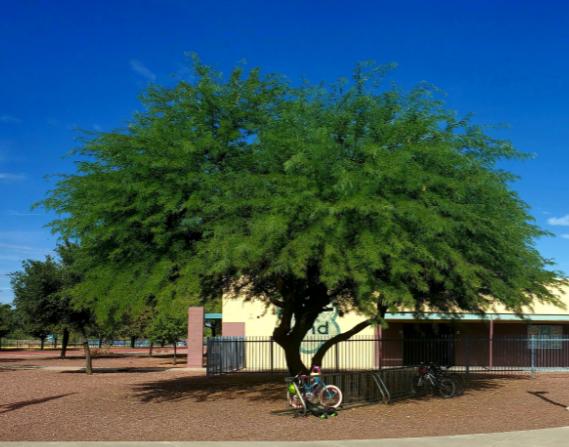 MES tree